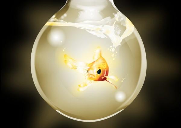 Goldfish_Turn_On_by_onewayprophet-992x1210